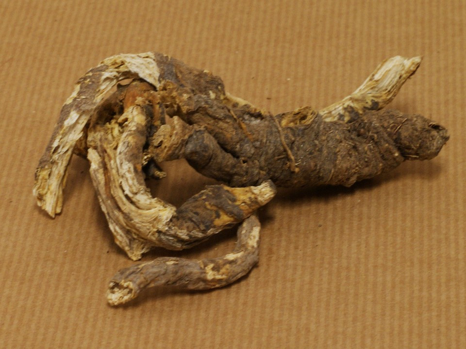 Name Root: Ligusticum Porteri (Osha) (aka Ligusticum Porteri, Osha